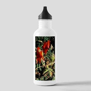 Sturt's desert pea flo Stainless Water Bottle 1.0L