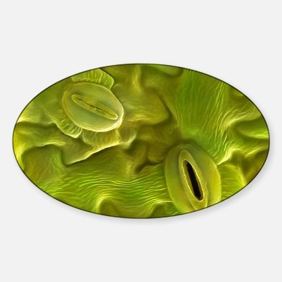 Stomata of Lavendula Dentata, SEM Sticker (Oval)
