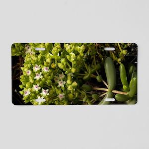 Stoeberia frutescens flower Aluminum License Plate