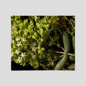 Stoeberia frutescens flowers Throw Blanket