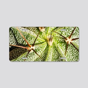 Star cactus (Astrophytum or Aluminum License Plate