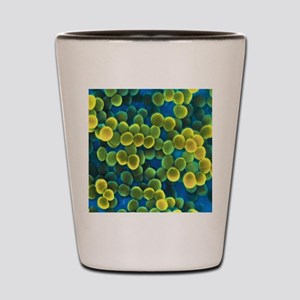 Staphylococcus bacteria Shot Glass