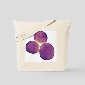 Staphylococcus aureus bacteria, SEM Tote Bag
