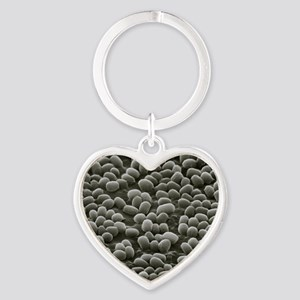 Spores of Bacillus anthracis bacter Heart Keychain
