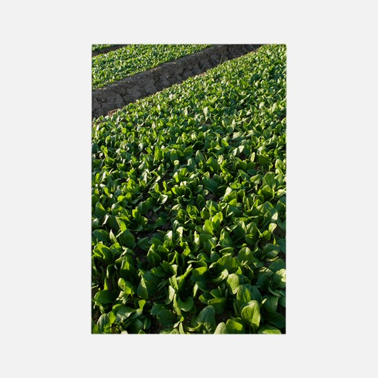 Spinach crop Rectangle Magnet