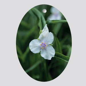 Spiderwort Oval Ornament