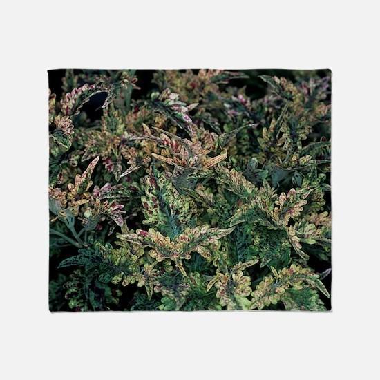 Solenostemon 'Paisley Shawl' foliage Throw Blanket