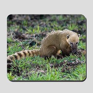 South American coati foraging Mousepad