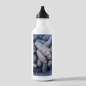 Solanum tuberosum 'Any Stainless Water Bottle 1.0L