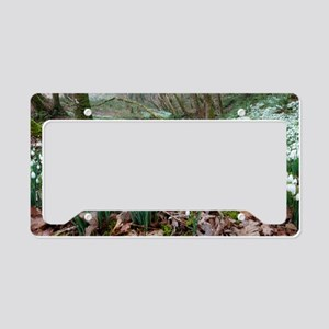 Snowdrops (Galanthus nivalis) License Plate Holder