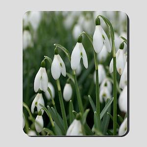 Snowdrop (Galanthus nivalis) flowers Mousepad