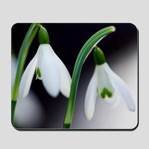 Snowdrop (Galanthus nivalis) Mousepad