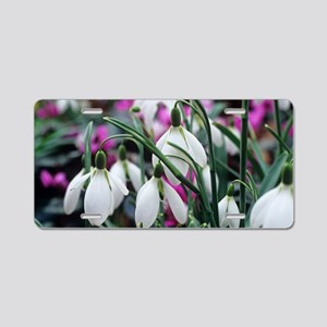 Snowdrop 'Oliver Wyatt's Gi Aluminum License Plate