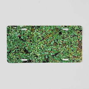 Smalleaf cotoneaster Aluminum License Plate