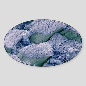 Snake dermis fibres, SEM Sticker (Oval)