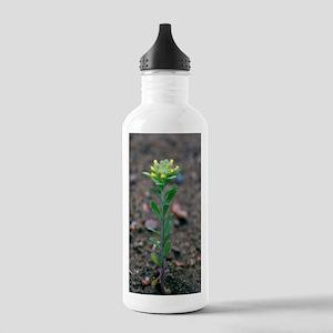 Small alyssum (Alyssum Stainless Water Bottle 1.0L