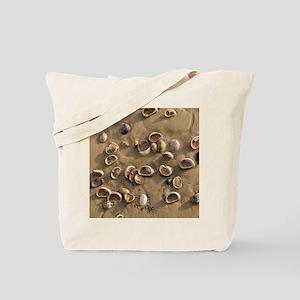 Slipper Limpet (Crepidula fornicata) Tote Bag