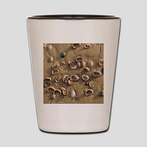 Slipper Limpet (Crepidula fornicata) Shot Glass