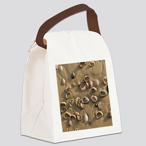 Slipper Limpet (Crepidula fornica Canvas Lunch Bag