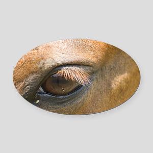 Eye of the Gelding Oval Car Magnet