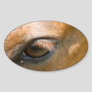 Eye of the Gelding Sticker (Oval)