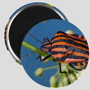 Shield bug Magnet