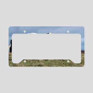 Shire horses License Plate Holder