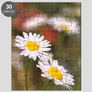 Shasta daisies (Leucanthemum x superbum) Puzzle