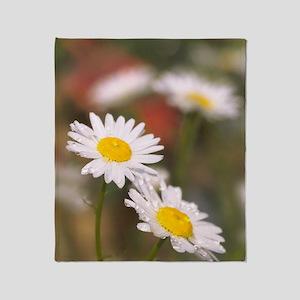 Shasta daisies (Leucanthemum x super Throw Blanket