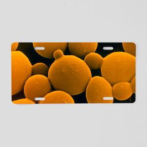SEM of yeast cells Aluminum License Plate