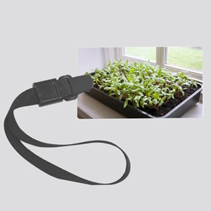 Seedlings of Perpetual Spinach Large Luggage Tag