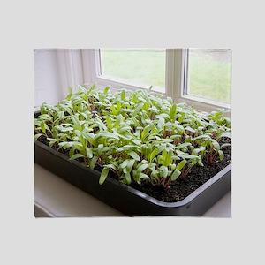 Seedlings of Perpetual Spinach Throw Blanket