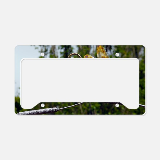 Sculpture of two dragonflies License Plate Holder