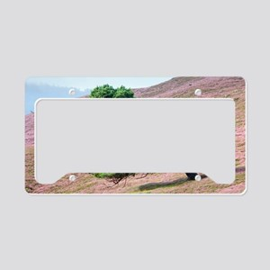 Scots pine tree (Pinus sylves License Plate Holder
