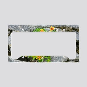 Saxifraga aizoides in flower License Plate Holder