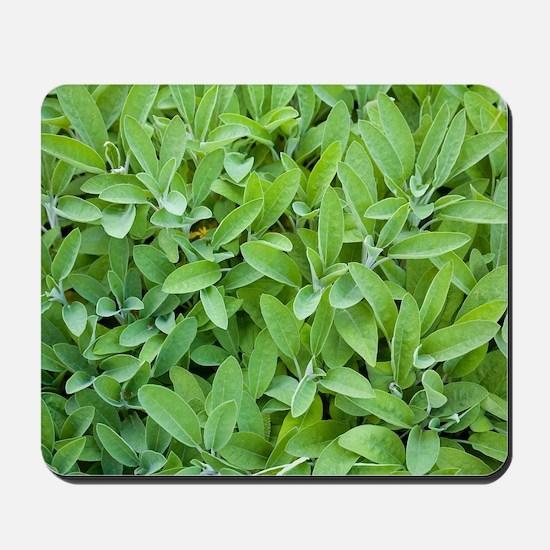 Sage (Salvia sp.) Mousepad