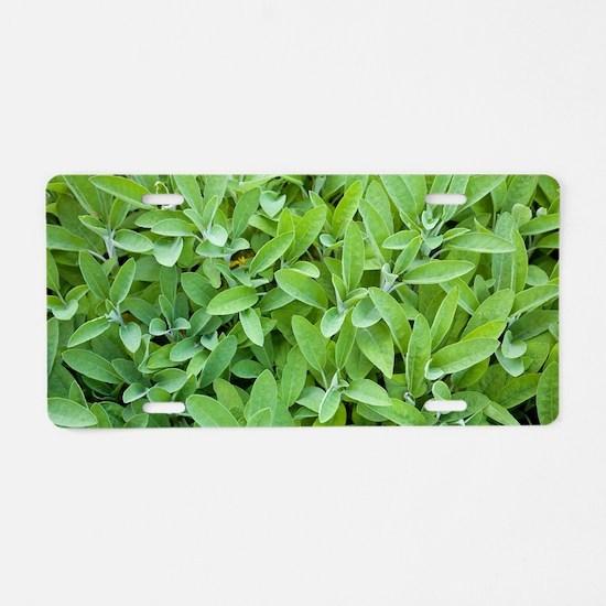 Sage (Salvia sp.) Aluminum License Plate