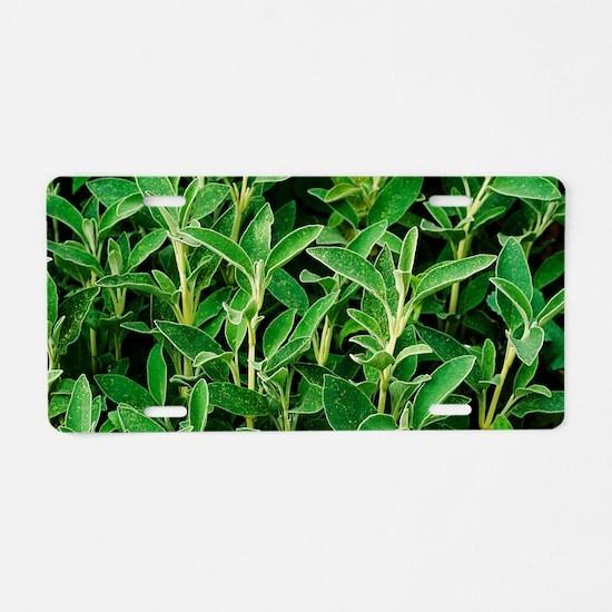 Sage (Salvia officinalis) Aluminum License Plate
