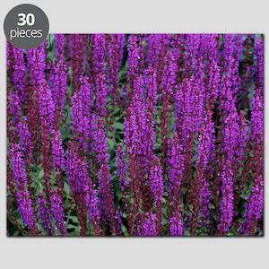 Sage (Salvia nemorosa) Puzzle