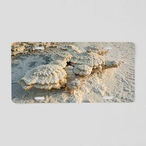 Salt encrustations by the D Aluminum License Plate