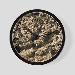 Sabellaria reefs (Fan worms) Wall Clock