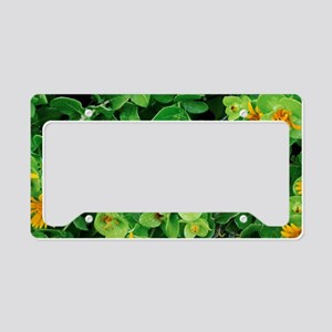 Salad Bush (Didelta spinosa) License Plate Holder