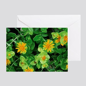 Salad Bush (Didelta spinosa) Greeting Card
