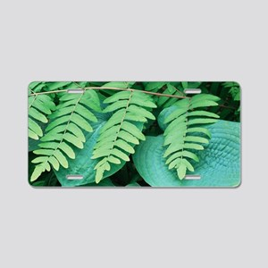 Royal fern (Osmunda regalis Aluminum License Plate