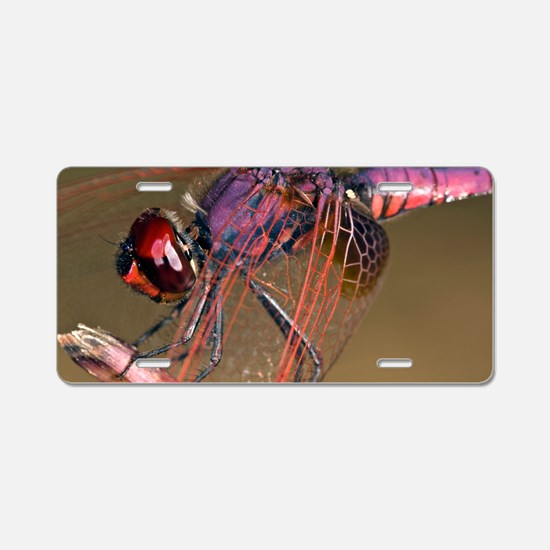 Ruddy darter dragonfly Aluminum License Plate