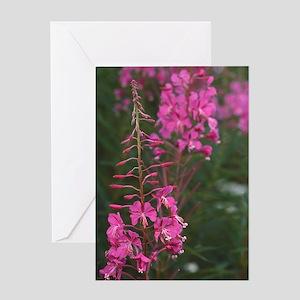 Rosebay willow-herb flowers Greeting Card