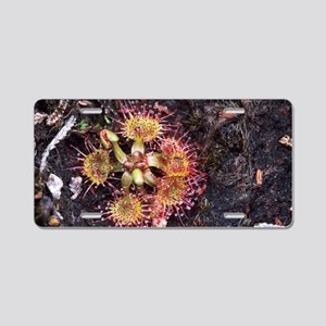 Round-leaved sundew, Droser Aluminum License Plate