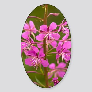 Rosebay willowherb Sticker (Oval)