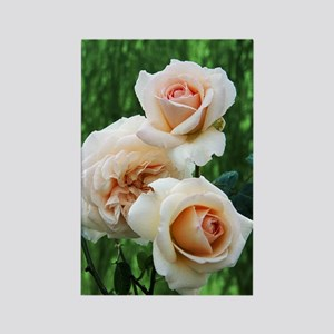Rose flowers (Rosa 'Penny Lane') Rectangle Magnet