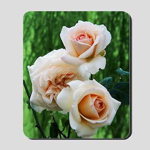 Rose flowers (Rosa 'Penny Lane') Mousepad